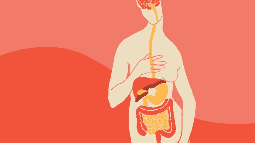 Graphic of human body with digestive system and gastrointestinal tract highlighted in red and orange.
