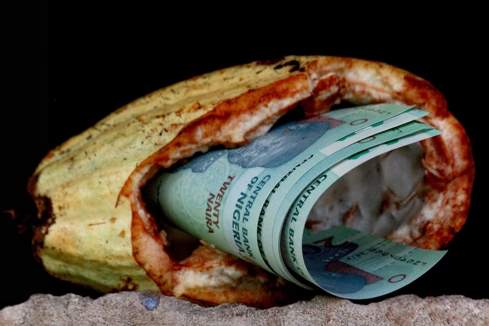 A hallow cocoa pod with dirty money stuffed inside, representing how the drive for profit allows for food slavery