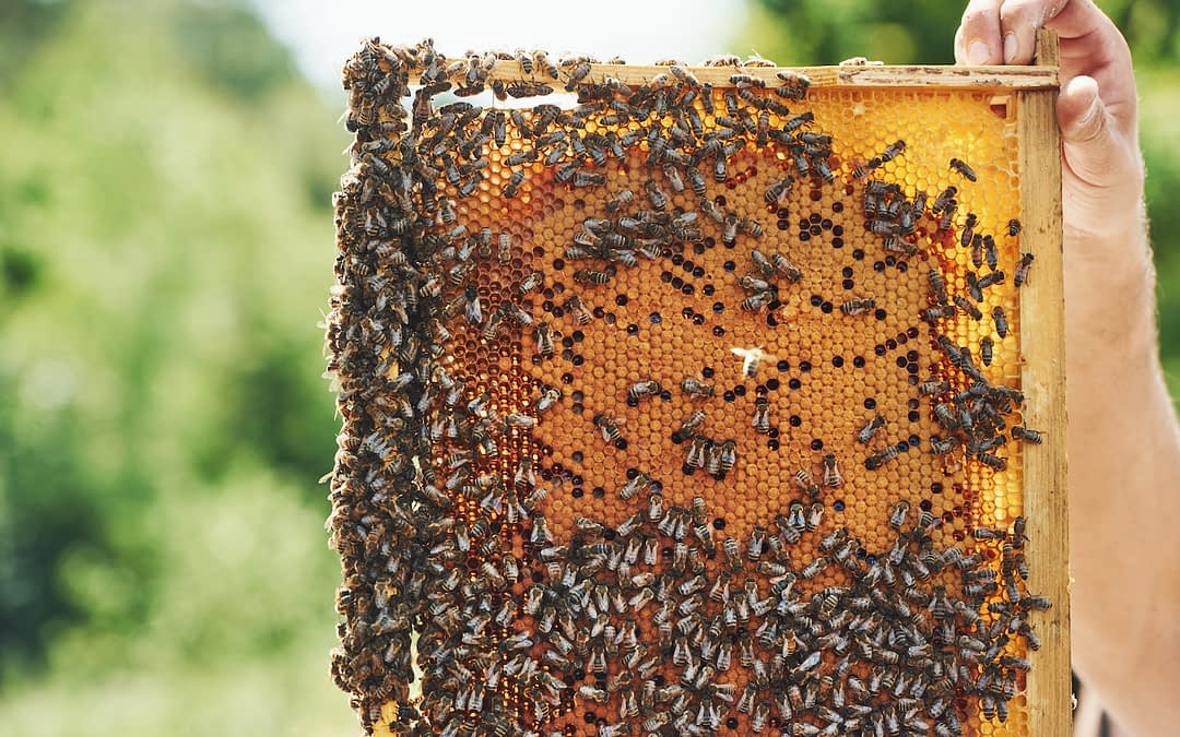 Is Honey a Sustainable Food?