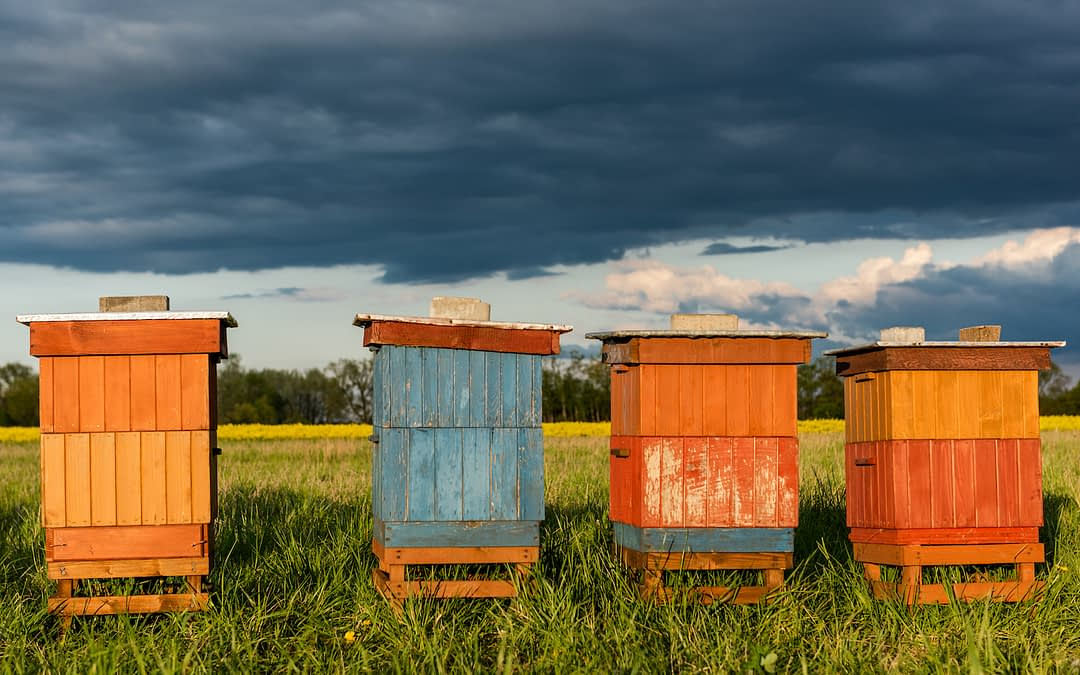 An Endangered Food System: A World Without Bees