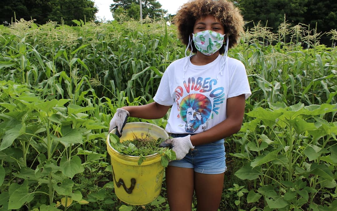Community Gardens and Why You Should Join One ASAP