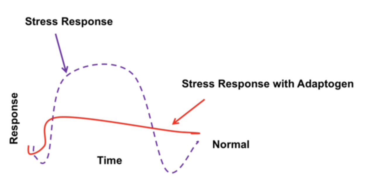 Stress Response and Adaptogens