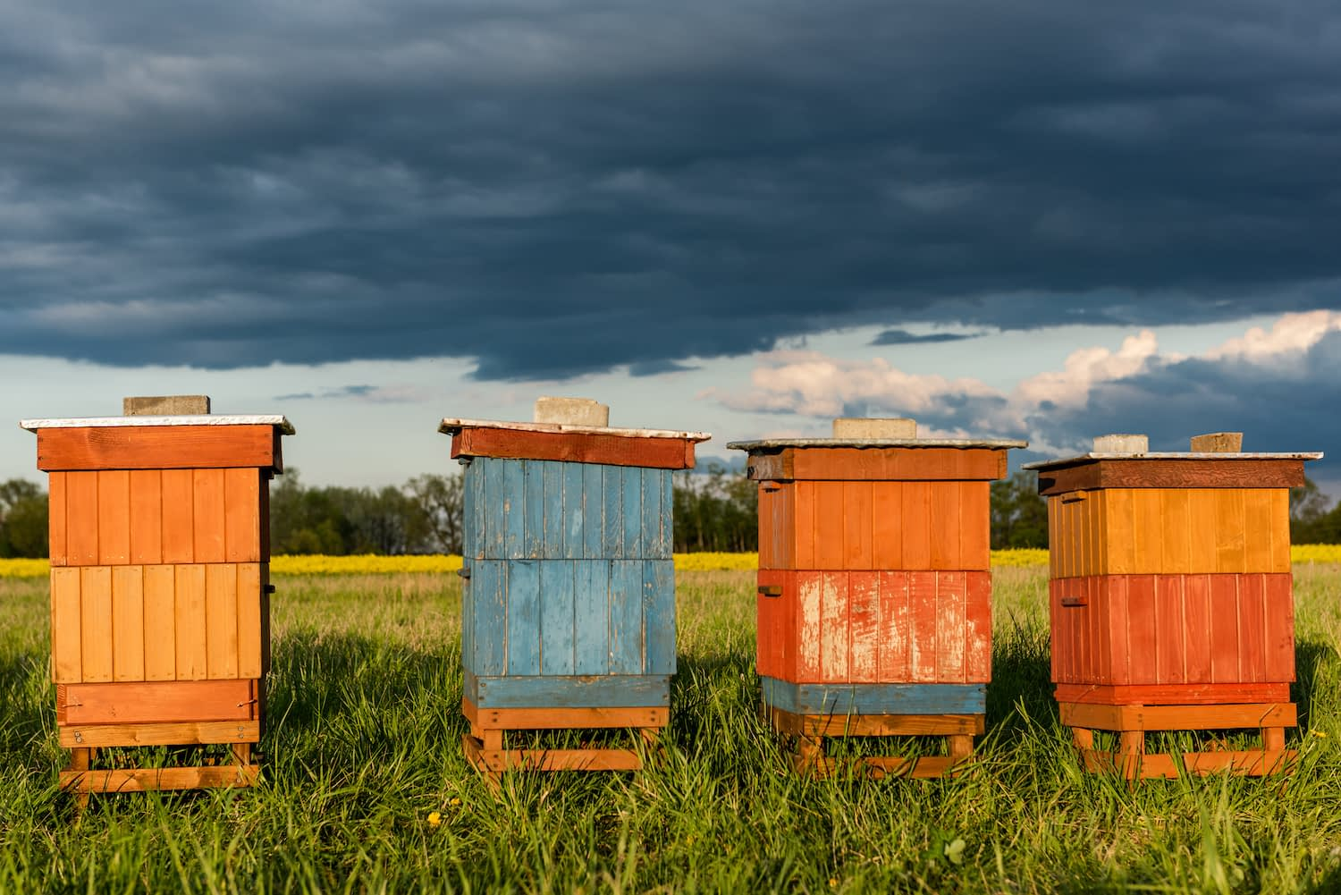 beehives with stormy background