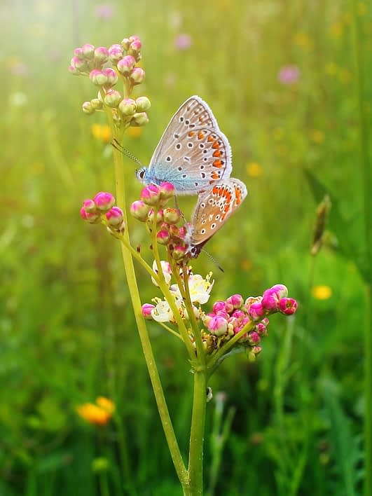 Two pink and blue butterflies pollinate a pink flower while the sun shines down