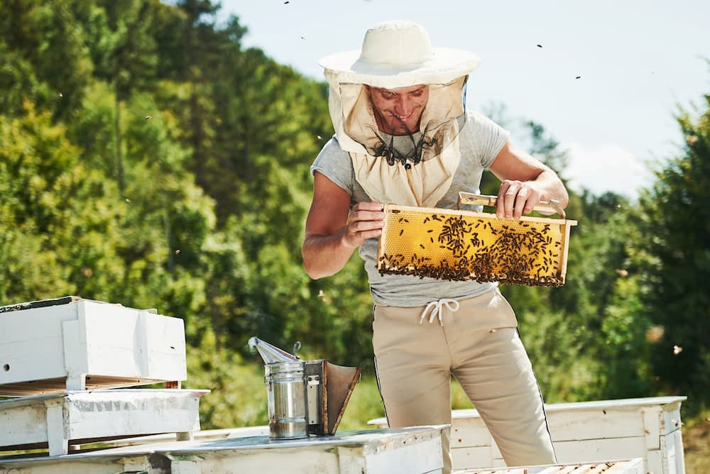 A beekeeper collects honeycomb from man-made beehives.