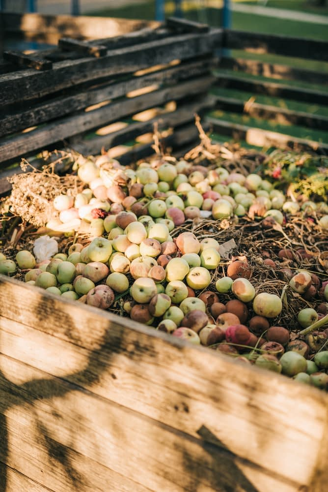 A pile of apples top a compost heap