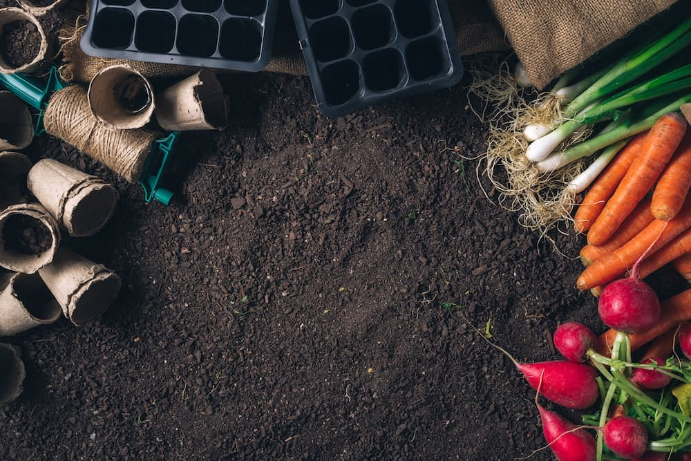 Vegetables and gardening supplies rest on rich, composted soil
