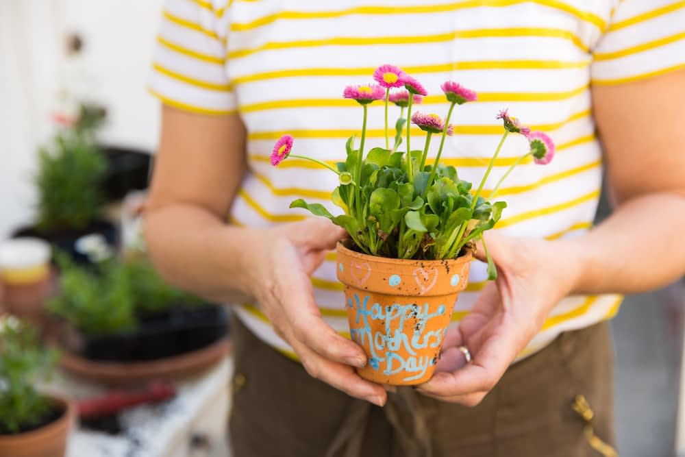 flowers, mother's day, history of mother's day, potted plant